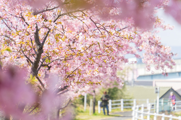 桜-2003021