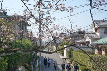 村野公園の桜-10