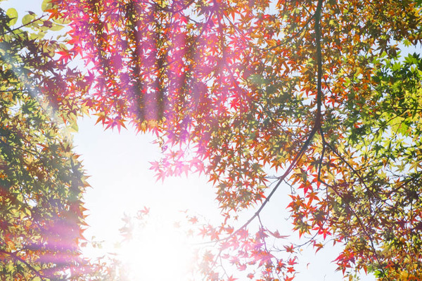 山田池公園-1611023