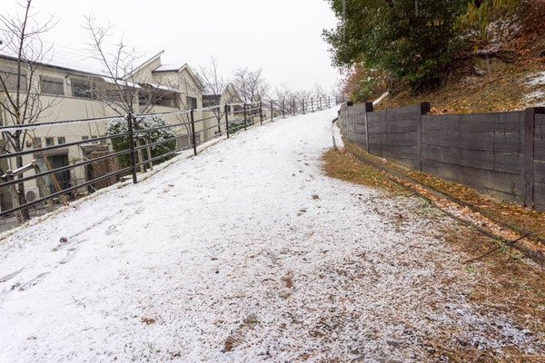 雪2101126