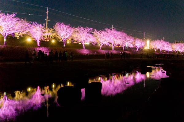 寝屋川桜-17032535