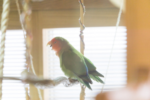 1木と小鳥カフェ-187