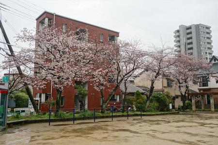 伊加賀公園-1