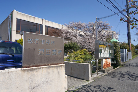 津田の桜-1