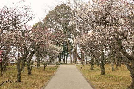意賀美神社の梅-2