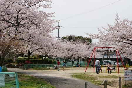 茄子作の桜130401_05