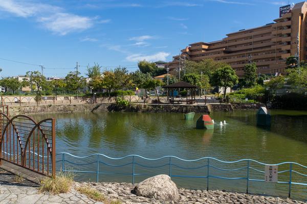 池の水-1910163