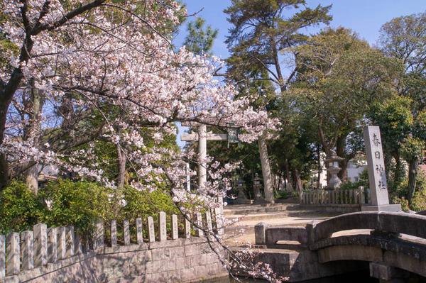 桜祭-1803262