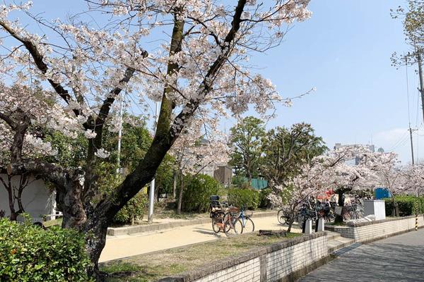 桜公園-1904063