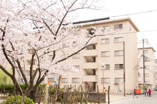 20150403くずは桜-5
