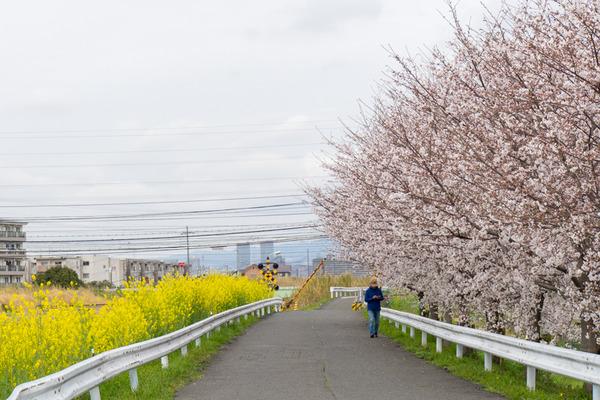 桜-2003314