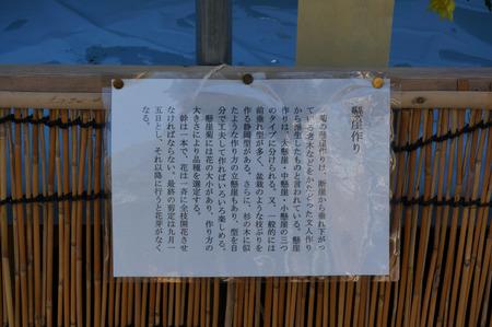 菊花展131105-17