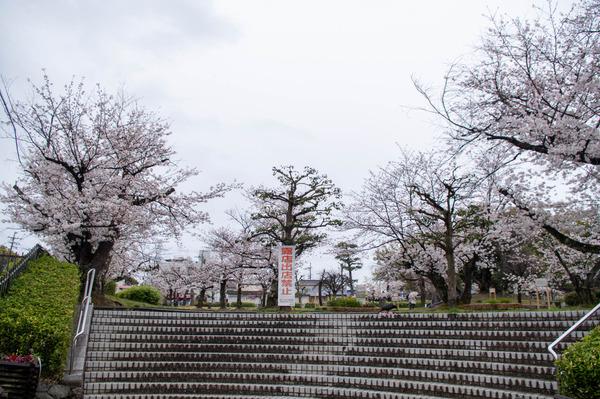 桜329-2103281