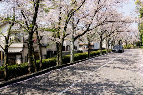 桜-1704145