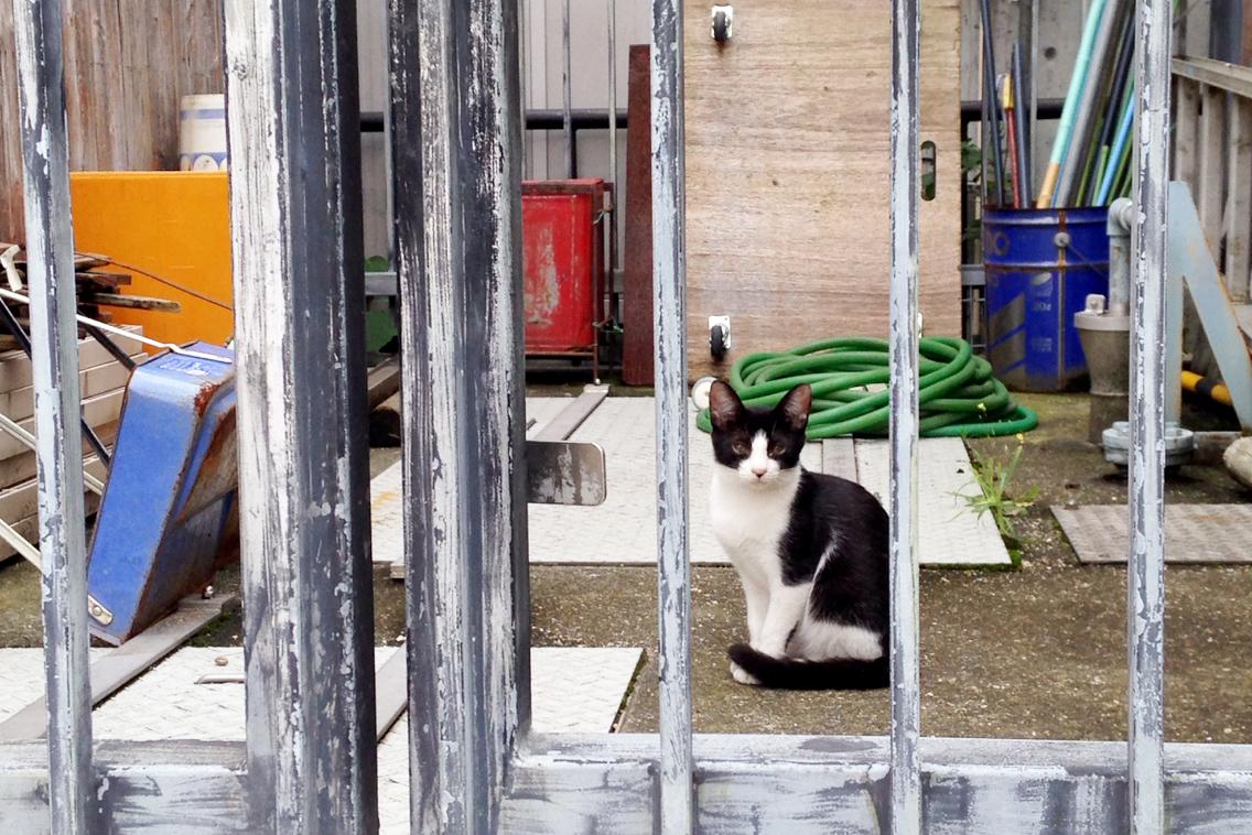 水面廻廊の猫
