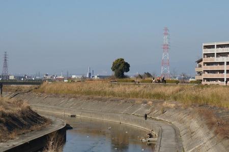 天野川に馬130131_03