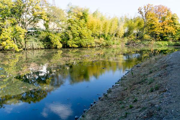 池の水ぜんぶ抜く5-1711279