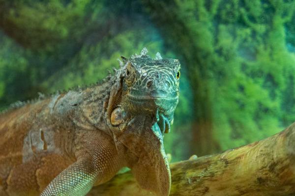爬虫類-2010069