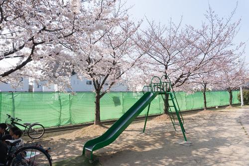 南中振公園桜-15033127