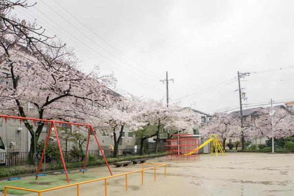 伊加賀公園-1604042