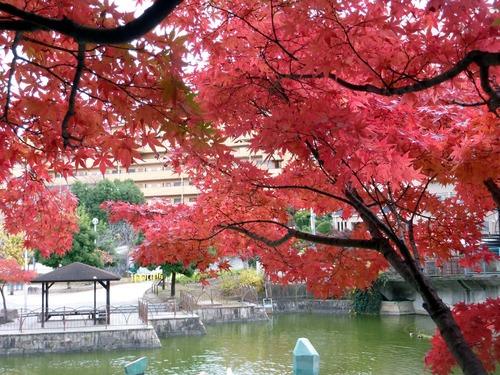 坊主池公園