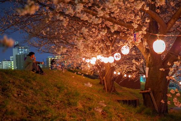 桜祭-1803269