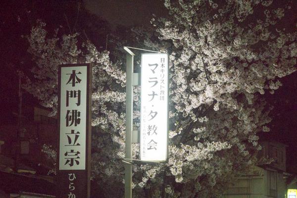桜-1704113