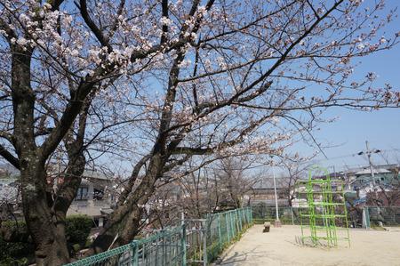 村野公園の桜-2