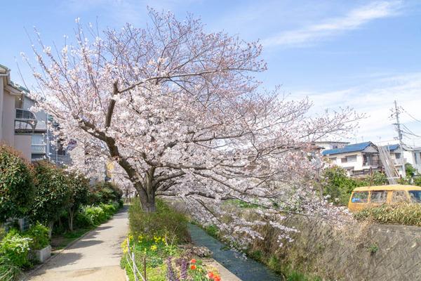 明るめ桜-1904051