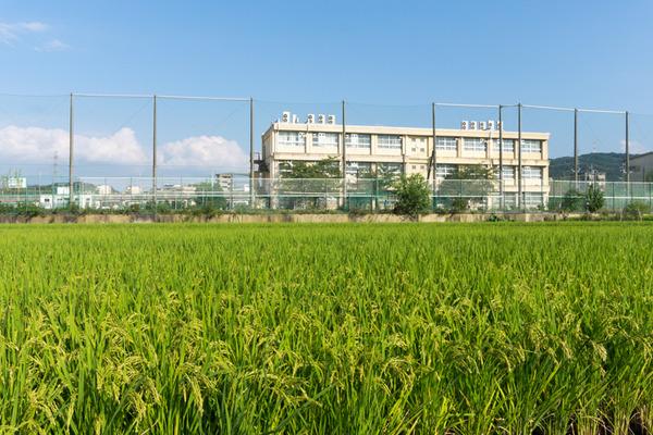 津田北町-16090937
