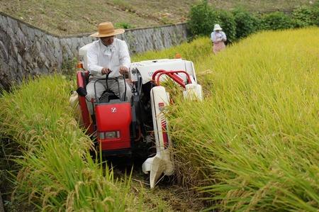 村野の米12