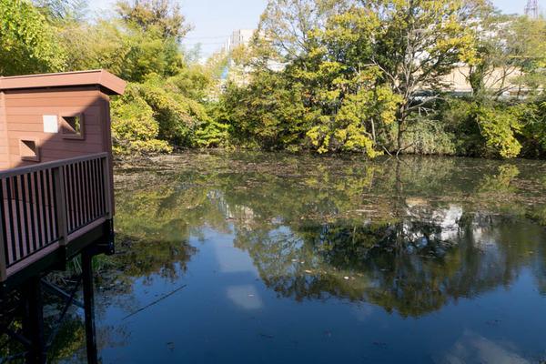 池の水ぜんぶ抜く5-17112710
