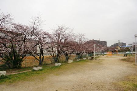 北谷川緑地130328-01