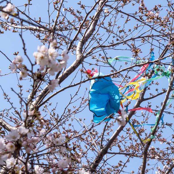 山田池桜の道-2103233
