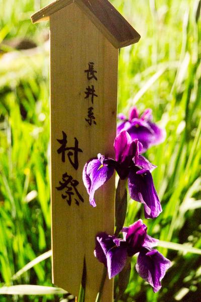 山田池公園-1706036