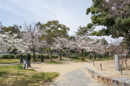 牧野公園の桜-6