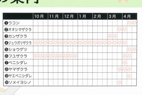 桜-1610247