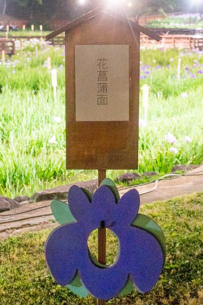 花しょうぶ-19060316