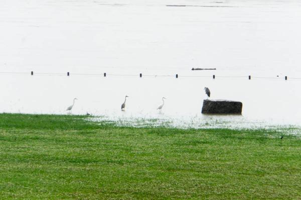 河川公園3-1807062