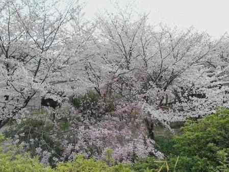 楽寿荘130330_01