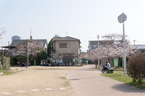 南中振公園桜-1503314