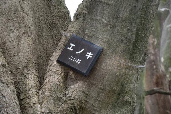 背桜道-1903301-8