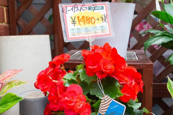 sakuranbo_通常_小-20200717-14