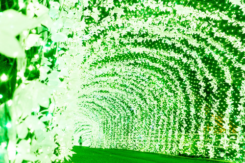 ひらかたパーク光の遊園地-151111102