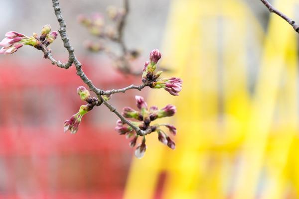 桜-2003274