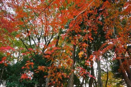 王仁公園131201-03