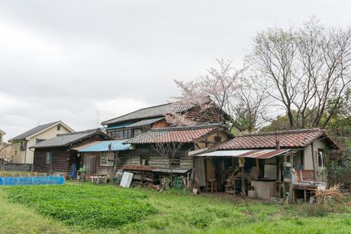 桜花祭2015-63