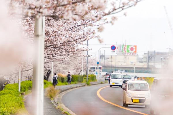 桜-2004022