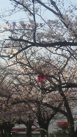 牧野阪公園130328_01