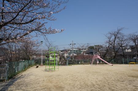 村野公園の桜-3